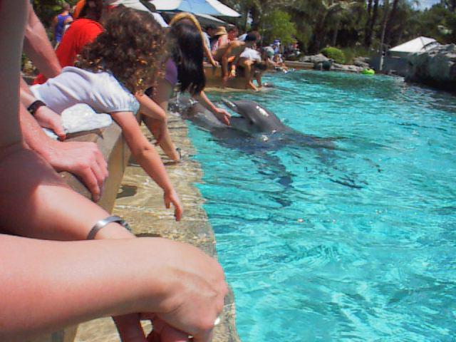 dolphin.jpg (58290 bytes)