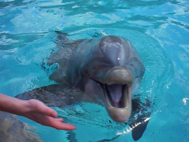 dolphin.jpg (56879 bytes)