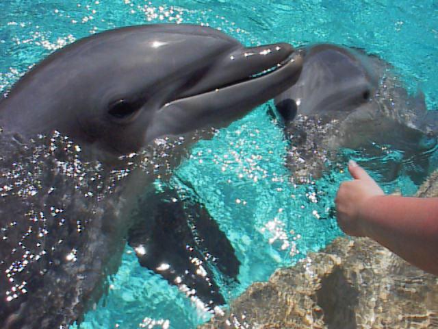 dolphin.jpg (59287 bytes)